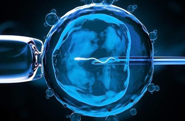单精子注射