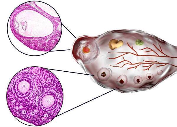 科学促排卵