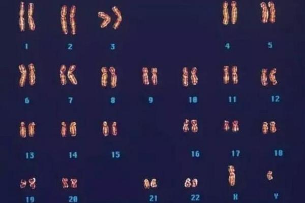 23对染色体