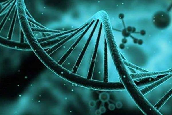 胚胎NGS基因测序技术.jpg