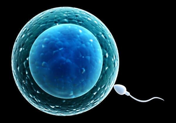 精子卵子.jpg