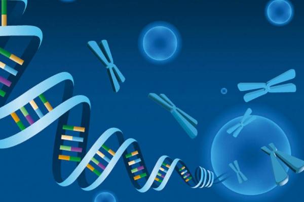 囊胚基因检测